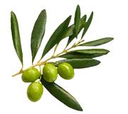 Herbodietética Rosa