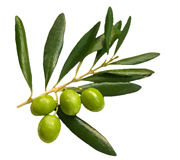 Herbolario Salvia